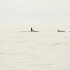 Orca Spirit Whale Watching Carpe Diem OUR Way Family Travel Blog 3