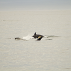 Orca Spirit Whale Watching Carpe Diem OUR Way Family Travel Blog 4