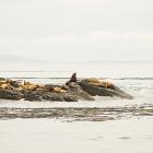 Orca Spirit Whale Watching Carpe Diem OUR Way Family Travel Blog 5