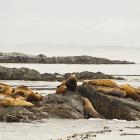 Orca Spirit Whale Watching Carpe Diem OUR Way Family Travel Blog 6
