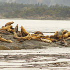 Orca Spirit Whale Watching Carpe Diem OUR Way Family Travel Blog 7