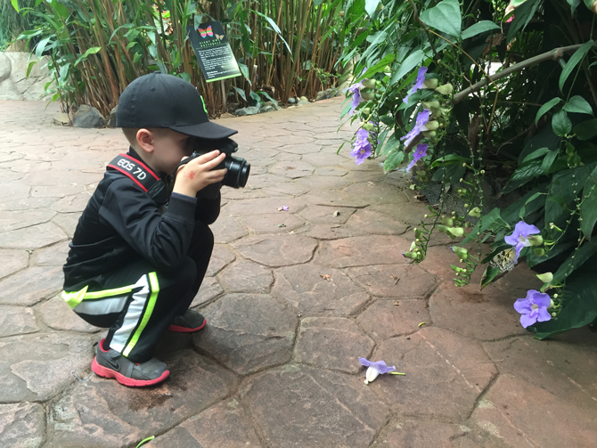 My Future Photographer taking photos of the Butterflies