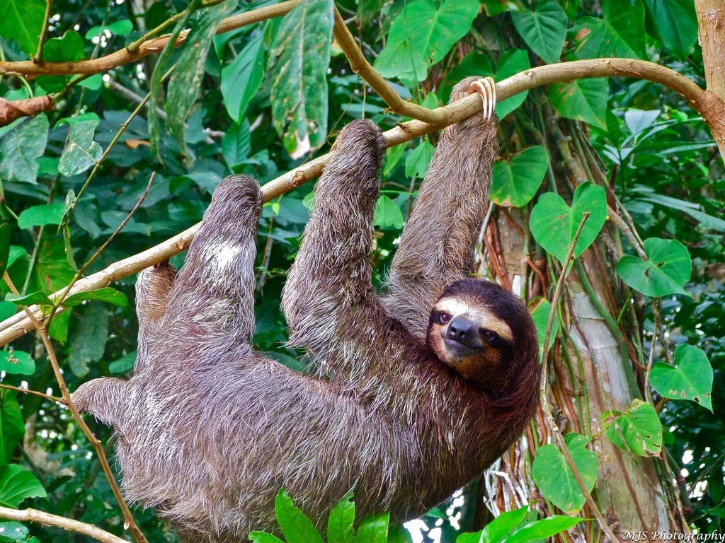 Visit the Sloth Rescue Sanctuary with the Family while in Costa Rica