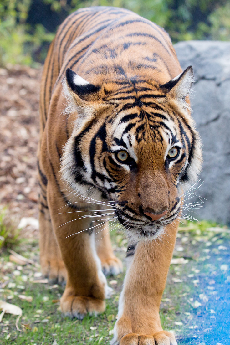 Top Things to do in Seattle Washington is to visit the Woodland Park Zoo