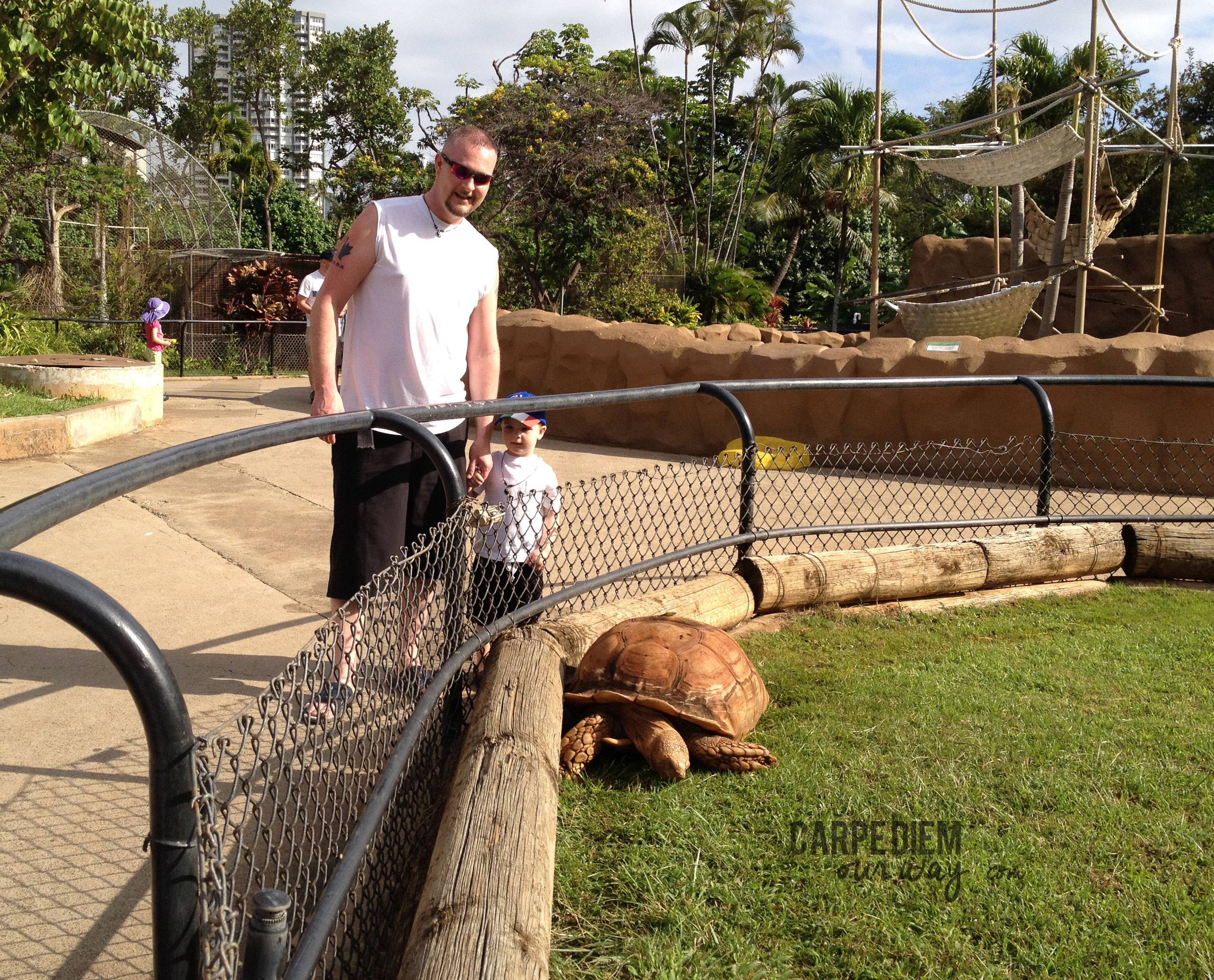 Getting up close at the Honolulu Zoo