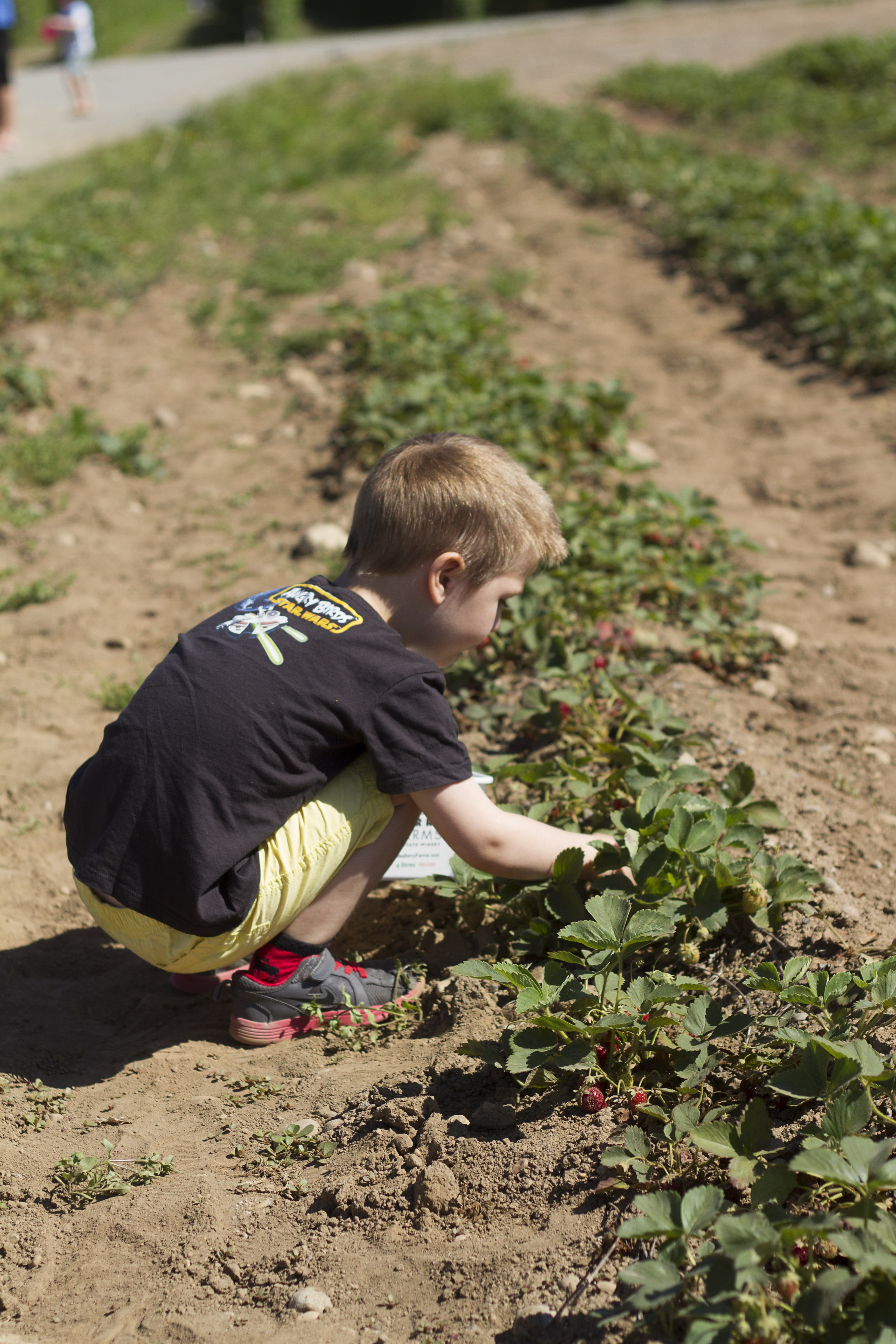 Krause berry farm carpe diem our way20150607_0004