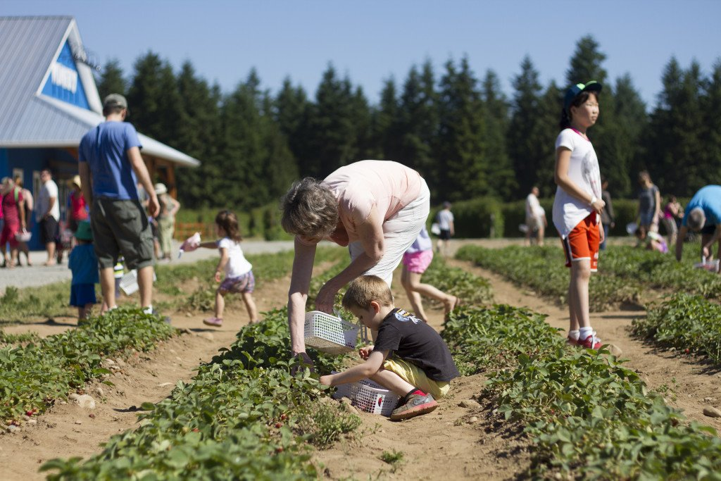 Krause berry farm carpe diem our way20150607_0010
