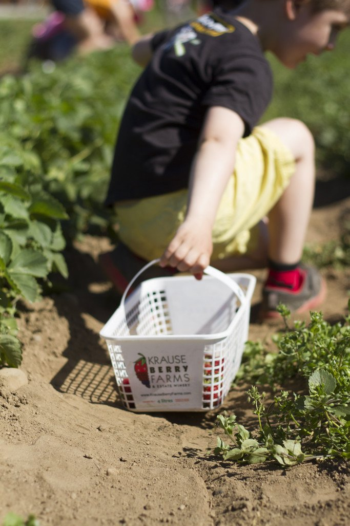 Krause berry farm carpe diem our way20150607_0015