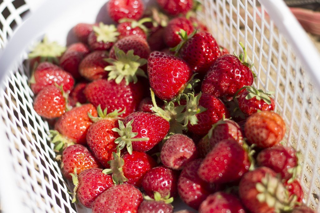Krause berry farm carpe diem our way20150607_0016