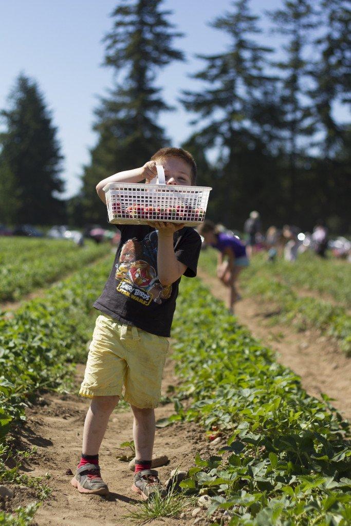 Krause berry farm carpe diem our way20150607_0018