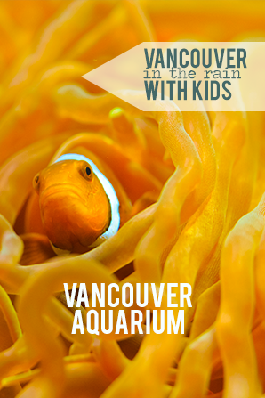 vancouver aquarium what to do with kids in vancouver in the rain