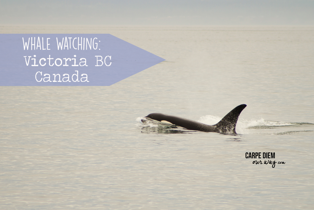 Bucket List Complete - Orca Spirit Whale Watching Carpe Diem OUR Way Family Travel Blog 15