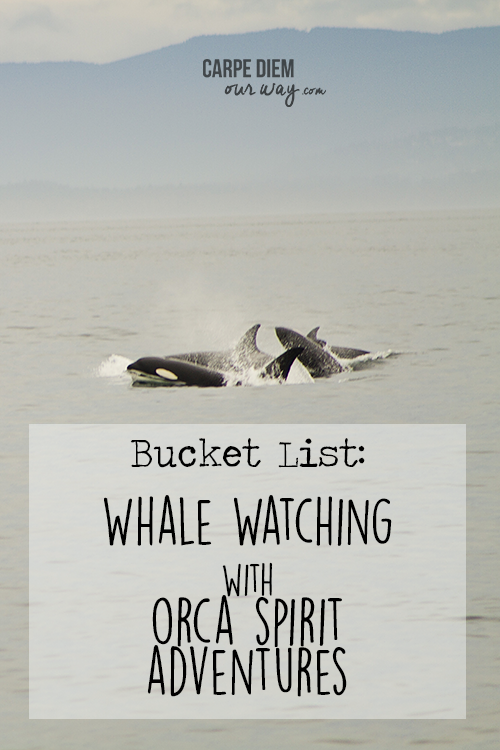 Bucket List- Orca Spirit Whale Watching Carpe Diem OUR Way Family Travel Blog 14