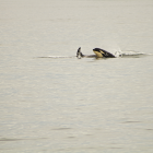Orca Spirit Whale Watching Carpe Diem OUR Way Family Travel Blog 1