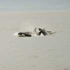 Orca Spirit Whale Watching Carpe Diem OUR Way Family Travel Blog 14