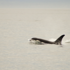 Orca Spirit Whale Watching Carpe Diem OUR Way Family Travel Blog 15