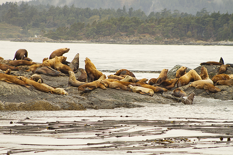 the Stinky Sea Lions