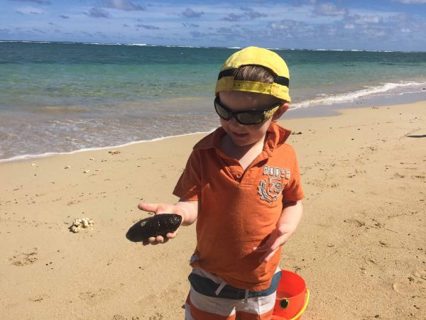 Oahu things to do with kids Found a Sea Cucumber in the tide pools