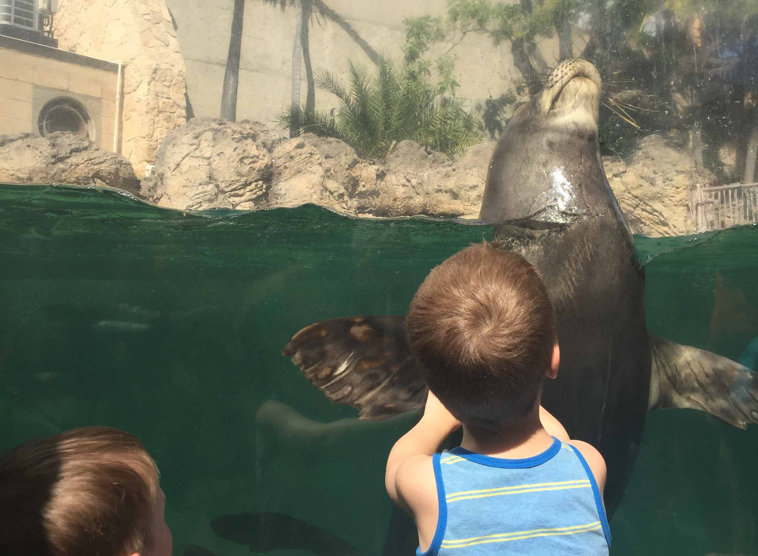 Learning about the rescued wildlife that the aquarium cares for