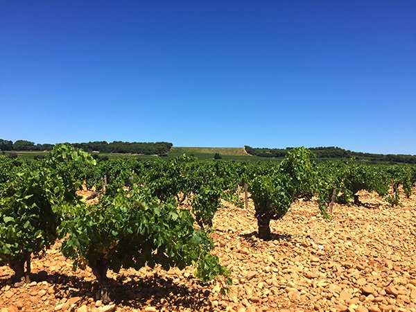 Things to do in Provence with Kids11