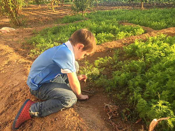 Exploring the organic garden at Movenpick