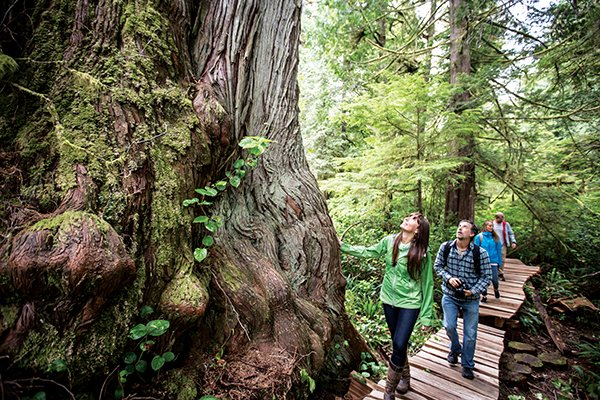 Tofino Camping and Hiking and Old Growth Forest Clayoquot Sound