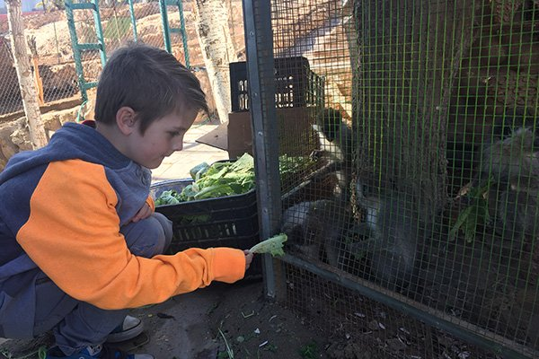 Fun things to do in Amman with Kids include the Amman Zoo