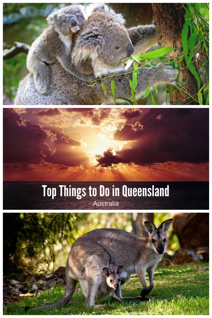 Top Things to do in Queensland Australia