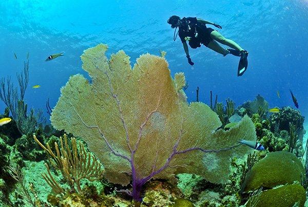 hurghada snorkelling trips