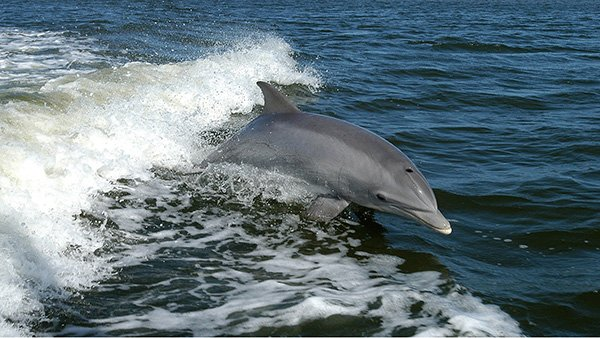 swim with dolphins hurghada | Hurghada Dolphin Trips