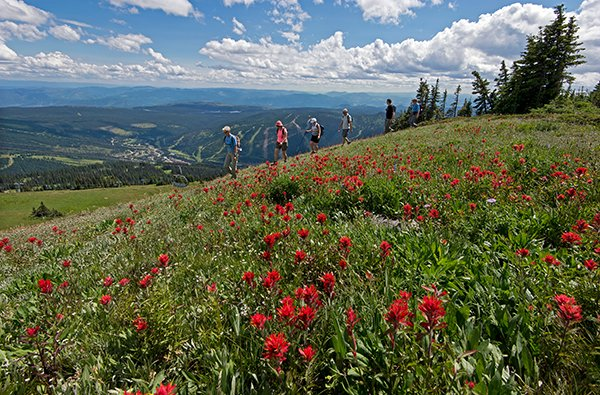 Hiking around the Alpine Flowers at Sun Peaks
