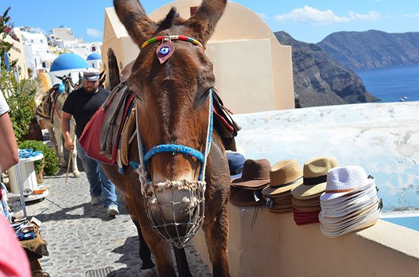 Santorini Souvenirs Greek Donkey