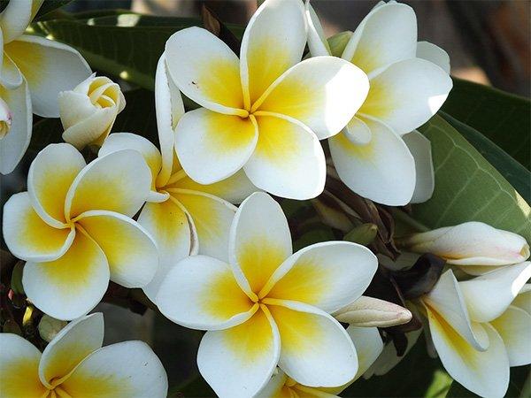 the Best Hawaiian Souvenirs