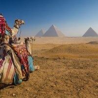 Cancel Trip to Egypt