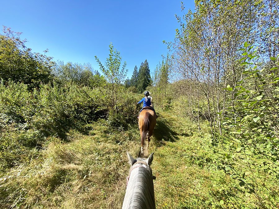 Horseback Riding is one of the popular things to do in langley