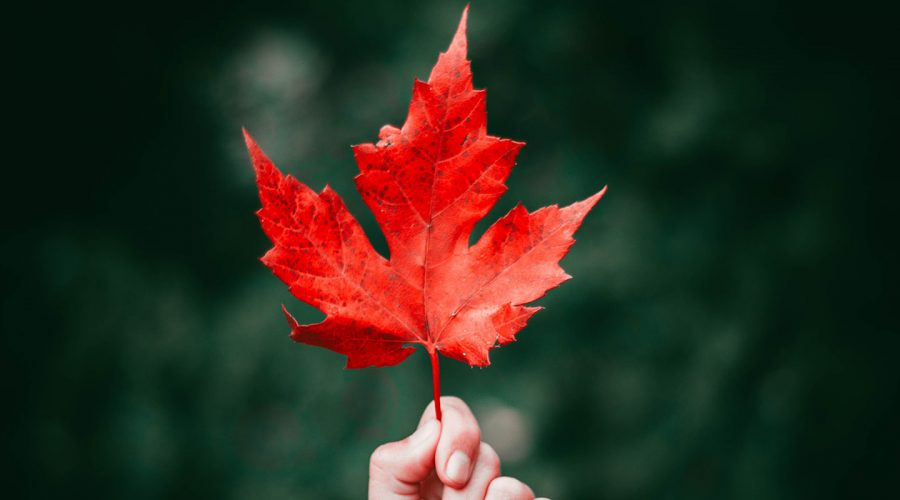 Canada - Maple Leaf