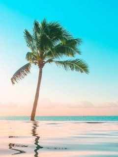 Tropical instagram photos with palm trees and smooth water.