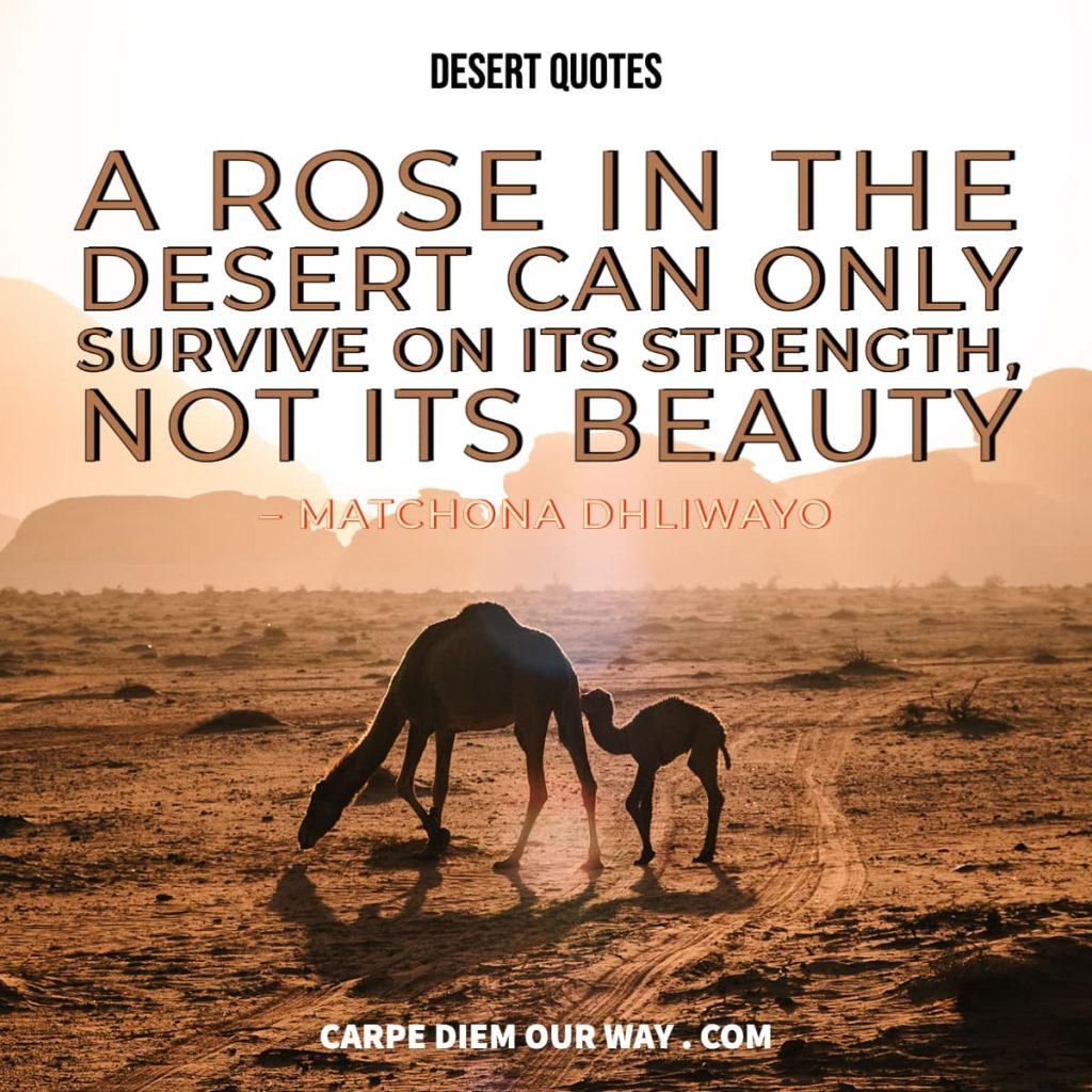 Desert Quotes - A rose in the desert can only survive on its strength not its beauty.