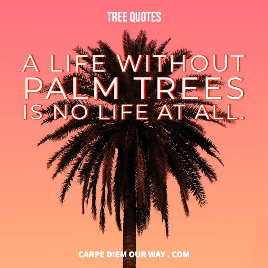 A life without palm trees is no life at all.