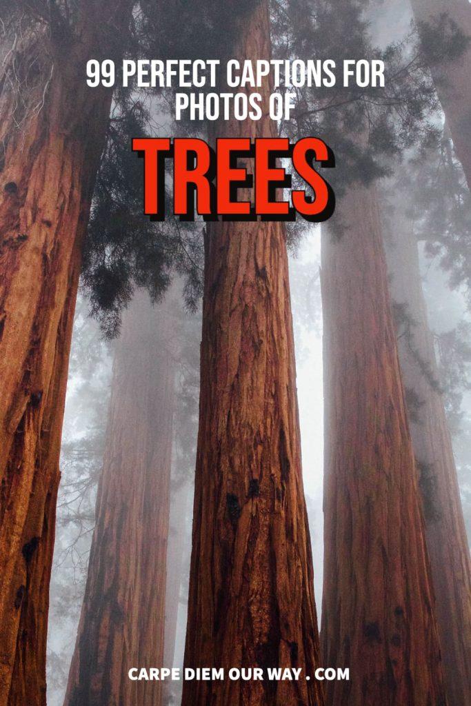 Tree captions for instagram
