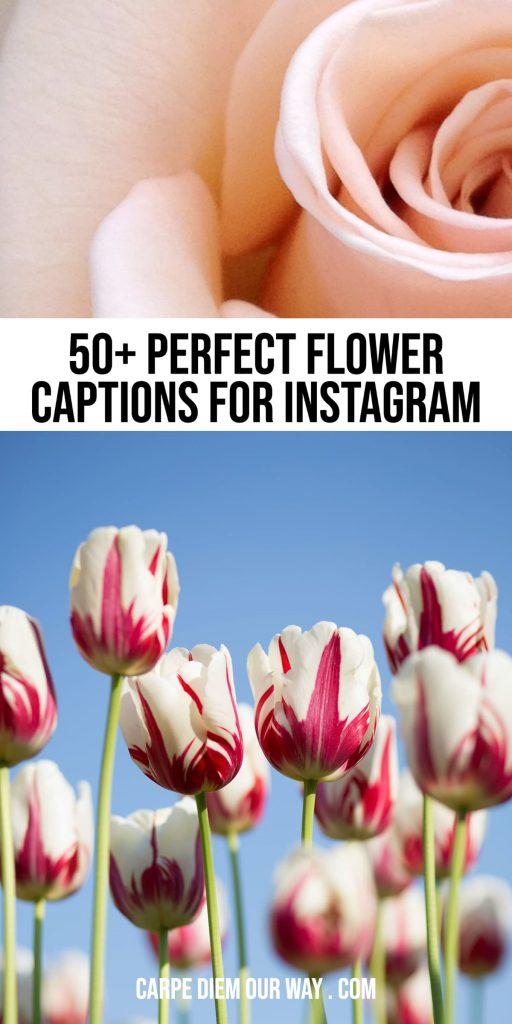 Flower instagram captions.